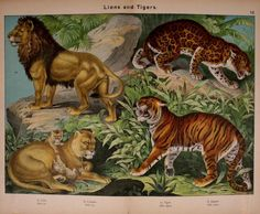 Natural History of the Animal Kingdom for the Use of Young People, Kirby & Schubert, 1889.