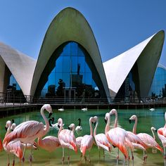 The Oceanographic Park in Valencia is the biggest and largest of its kind in Europe. This was definitely the highlight of my visit in Valencia. If you're going to visit . Spain And Portugal, Photo Essay, Best Cities, Places Ive Been, The Good Place, Beautiful Places, Places To Visit, Tours, Architecture