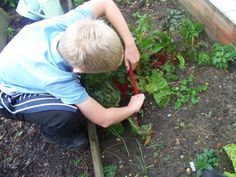 A pupil working hard in one of the raised beds in Orford's Kitchen Garden!