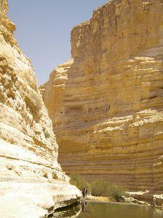 Ovdat Springs in the Negev Desert Israel