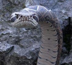 Резчик по дереву Майк Стиннетт из Орегона делает трости в виде змей, удивительно похожие на настоящих