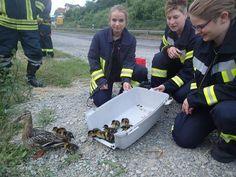 Kameraden der Feuerwehr Hann. Münden haben eine Entenfamilie gerettet.