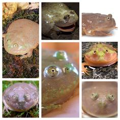 8 Best Froggy images in 2018 | Frogs, Frog, toad, Rettili