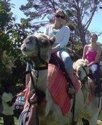 Author Celia Fitzgerald Author, Horses, Gallery, Animals, Animales, Animaux, Horse, Animal Memes, Animal