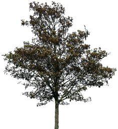 tree 36 png by gd08.deviantart.com on @deviantART
