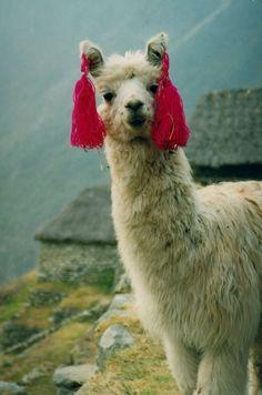 39 Razones por las que no deberías visitar Perú