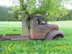 I love this photo of a tree growing through the bed of an old abandoned truck…