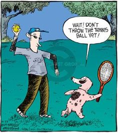 The Cartoonist Group - Dave Coverly :: Speed Bump :: :: Image Number: 53208 :: Wait! Don't throw the tennis ball yet! Speed Bump, Comic Strips, Tennis, Cartoons, Number, Activities, Group, Comics, Pets