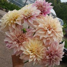 Goose Creek Gardens, Ltd | Boutique flower farm