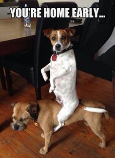 The 61 Most Awkward Moments In The History Of Dogs