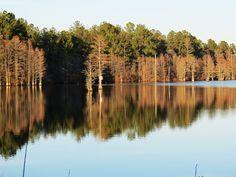 cedar creek rd cypress pond 3.jpg by Sabre - Hope Mills, via Flickr