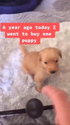 Cute Funny Dogs, Funny Dog Memes, Funny Vid, Really Funny Memes, Cute Funny Animals, Cute Animal Memes, Animal Jokes, Cute Animal Videos, Cute Animal Pictures
