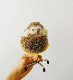 A Day In The Life of Amelia The Hedgehog + Best Of The Web | Design*Sponge