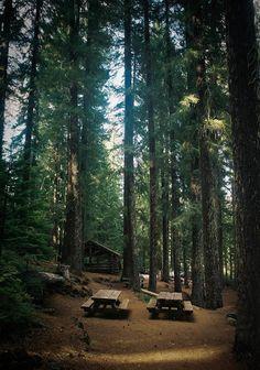 Pine tree fragrance