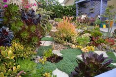 Spring succulent garden by designer Laura Eubanks. Add some whimsy to your garden today. Paint something purple!