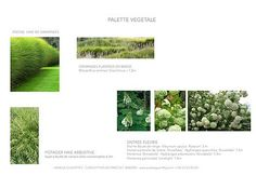 I Paysagiste conceptrice I Bourgogne I Palette végétale jardin Maison M