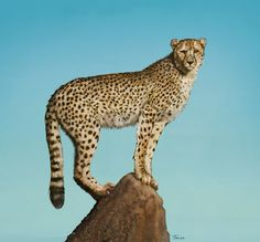 Finished painting of a Cheetah