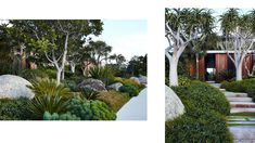 Australian Architecture, Australian Homes, House With Land, Sydney Gardens, West Facing Garden, Cactus, Giant Tree, Coastal Gardens, Tropical
