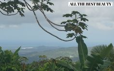 El Yunque Rainforest in Puerto Rico  www.AllTheBestBeauty.com