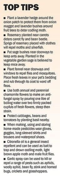 """(I'll have to try these--thinking I can use herbs as """"mini-bed-hedges"""" in the garden rather than boxwood, whicih is too forma and not edibe!) Homestead Survival - Gardening Top Tips"""