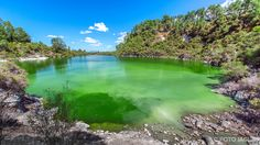 Neuseeland (Nordinsel) - Wai-O-Tapu Thermal Wonderland, Rotura