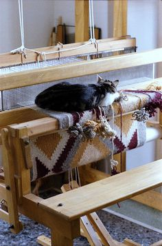 Cat on the loom by jmlwinder. My husband bought a loom when he got out of college. I want to make a rug now the loom has it's own room.