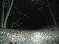 forêt nuit - Google Search