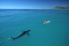 Many thought Peschak's best-known image was a digital fake when it was published, but he says it was actually one of the last photos he took using film before switching to digital. Peschak explains in his book that researchers were using a kayak to study white sharks in an inshore area of South Africa that was too treacherous for a research boat.