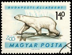 stamp hungary 1961 Ursus maritimus Eisbär polar bear by pixelschubser.de, via Flickr