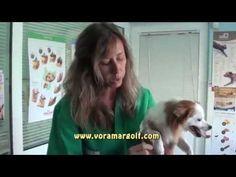 Como cortar las uñas a un perro, explicado por veterinario. - YouTube