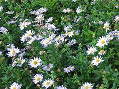 Stabiele vaste planten die niet omwaaien | De Tuinen van Appeltern Plants, Plant, Planets