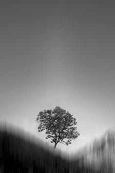 One | Owen Schaefer