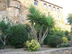 În luna august se închide Spania – Featured, Travel | Catchy Places To Visit, Plants, Travel, Side Garden, Gardens, Viajes, Destinations, Plant, Traveling