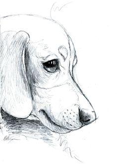 Art By Eddy Dachshund Sketch www.facebook.com/artbyeddy