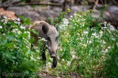 Wildsau im Blumenladen ; Wild Boar, Shop, Flowers, Advertising Photography, Product Photography, Landscape, Animals, Flower, Store