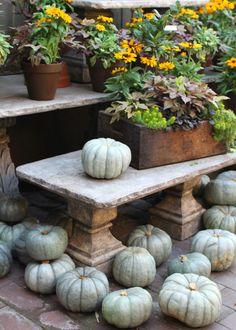 cinderella pumpkins, fall container garden on stone bench