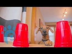 Find The Hidden Dog Treat- Marking Our Territory | Petcentric