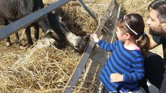 Why not visit the #Pafos Zoo and feed some of the lovely animals