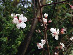 Pretty flowers in welford park