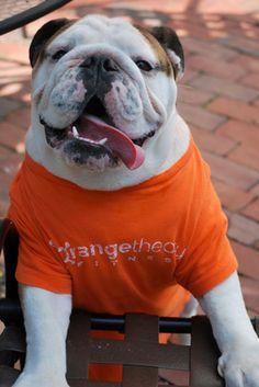 Orangetheory Fitness Brighton