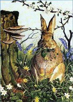 A Polar Bear's Tale: ...rabbits...