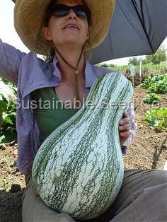 Green Stripe Cushaw Pumpkin Seed - Heirloom Seeds: Sustainable Seed Company