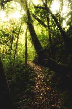 jonahreenders:  Walking with the Trees | Monteverde, Costa Rica.By: Jonah Reenders