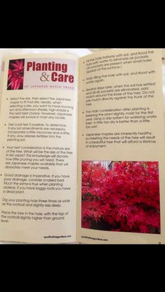 Japanese Maple Plant Care