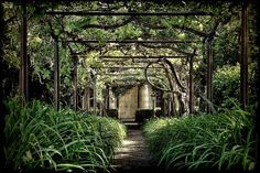 Antique pergola arbor over aged brick alley with lush overgrown green vegetation and old rusty steel lattice arches.  Love the steel lattice.