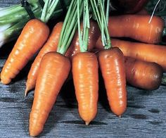 Royal Chantenay Heirloom Carrot Seeds Non-GMO Naturally Grown Open Pollinated Gardening Container Gardening Vegetables, Root Vegetables, Vegetable Gardening, Carrot Seeds, Potato Cakes, Clay Soil, Seed Packets, Garden Seeds, Trends