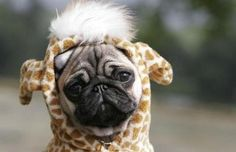 Aw this must be my dog!!!!!!