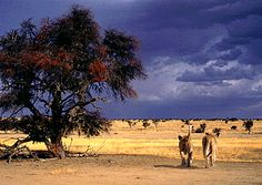 Lesson Plan - AFRICA: Animals of the African Savannahs