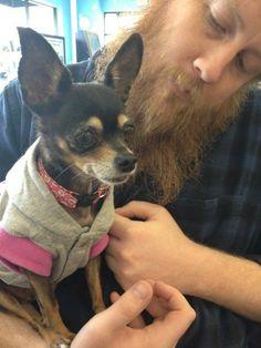 Bob Bryar everyone Bob Bryar, My Chemical Romance, Chihuahua, Boston Terrier, Dogs, Animals, Beautiful People, Boston Terriers, Animales