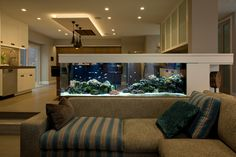 Relaxing evening gatherings with this beautifully designed saltwater aquarium